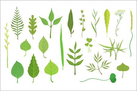 Trees And Plants Leaf Collection Stock Illustratie