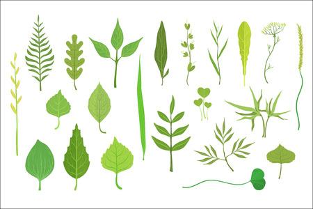 Colección de hojas de árboles y plantas