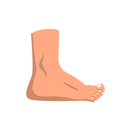 Ludzka stopa wektor stojący ilustracja na białym tle