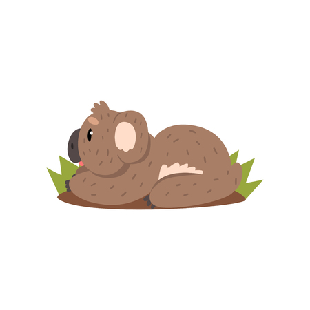 Cute koala bear lying on the ground, Australian marsupial animal character vector Illustrations on a white background