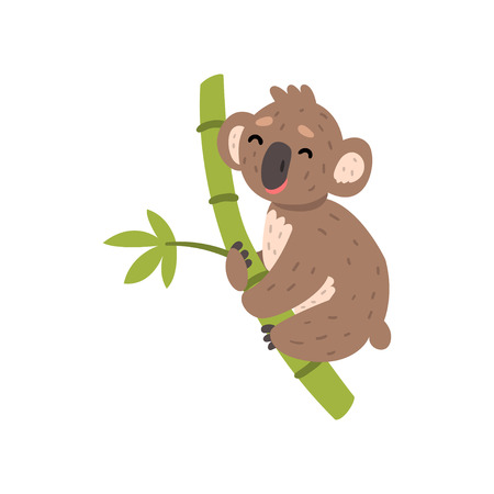 Cute koala bear climbing tree branch, Australian marsupial animal character vector Illustrations on a white background