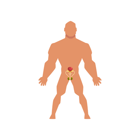 Male biological sexual system, anatomy of human body vector Illustration isolated on a white background. Ilustrace