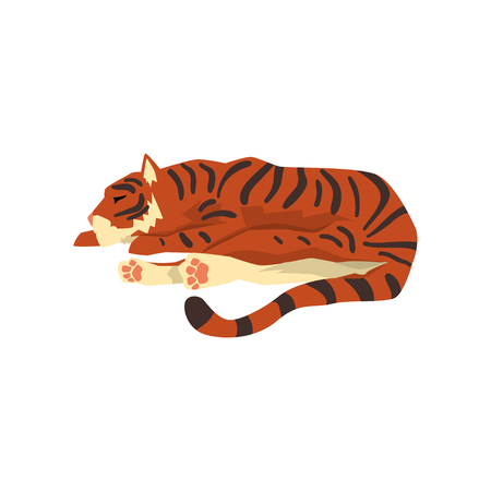 Tiger sleeping on the floor, wild cat, predator cartoon vector Illustration isolated on a white background. 일러스트
