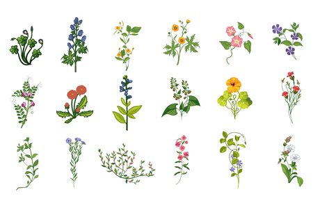 Wild Flowers Hand Drawn Set Of Detailed Illustrations. Herbs And Plants Realistic Artistic Drawings Isolated On White Background. Stock Illustratie