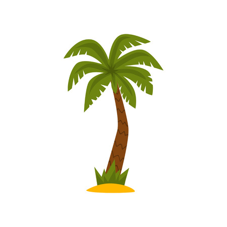 Beautiful palm tree, tropical evergreen plant vector Illustration isolated on a white background. Çizim