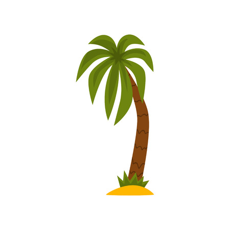 Palm tree, beautiful tropical evergreen plant vector Illustration isolated on a white background.