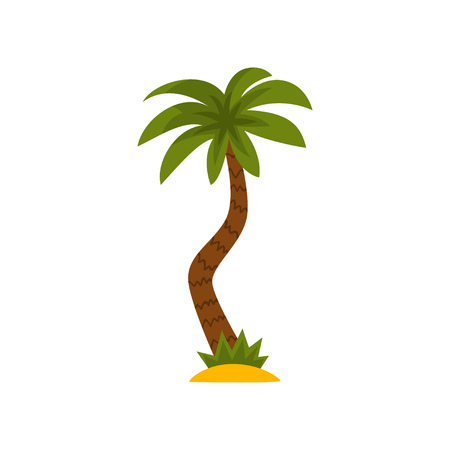 Palm tree, tropical evergreen plant vector Illustration isolated on a white background. Illustration