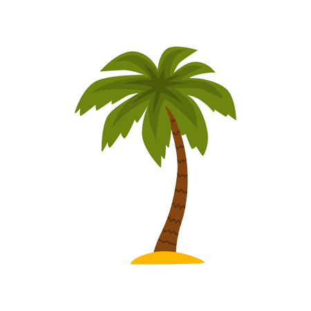 Beautiful tropical evergreen palm tree vector Illustration isolated on a white background.