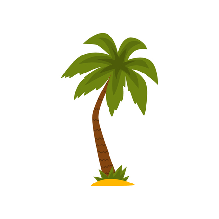 Beautiful green tropical palm tree vector Illustration isolated on a white background.