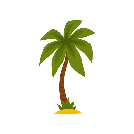 Tropical evergreen palm tree vector Illustration isolated on a white background. Illustration