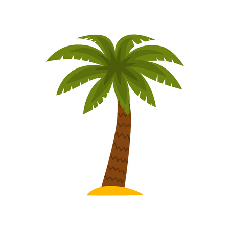 Palm tree, tropical plant vector Illustration isolated on a white background.