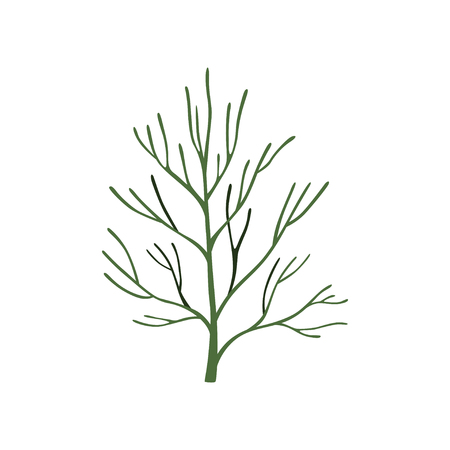 Green fresh dill leaf, vegetarian healthy food, aromatic organic herb for cooking vector Illustration isolated on a white background.