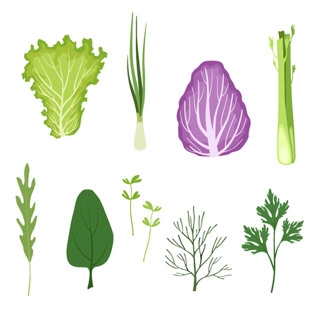 Salad greens and leaves set, vegetarian healthy organic herbs and leafy vegetables for cooking vector Illustrations isolated on a white background. Ilustracja
