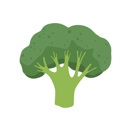 Broccoli vegetable, vegetarian healthy food vector Illustration isolated on a white background.
