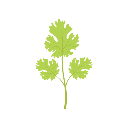 Fresh green watercress leaf, vegetarian healthy food, organic herb for cooking vector Illustration isolated on a white background.