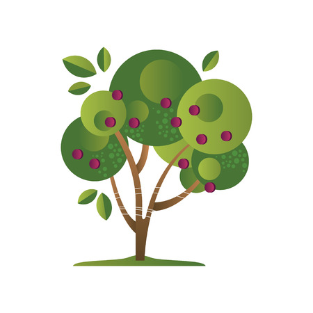 Green tree with plums, garden plant with ripe fruits vector Illustration isolated on a white background.