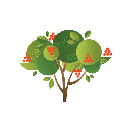 Rowan garden tree with ripe berries vector Illustration isolated on a white background.