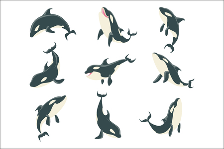 Arctic Orca Whale Different Body Positions Set Of Illustrations. Collection Of Marine Animal Stickers In Simple Realistic Style On Blue Background.