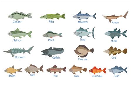 Ardoise d'identification des poissons de rivière avec noms. Illustration infographique réaliste dans un style simple sur fond blanc.