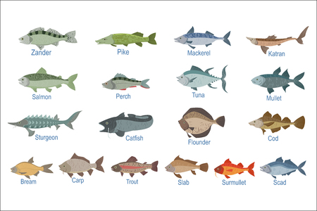 River Fish Identification Slate With Names. Realistic Infographic Illustration In Simple Style On White Background.