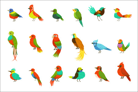 Exotic Birds From Jungle Rain Forest Set Of Colorful Animals Including Species Of Paradise Birds And Parrots. Winged Fauna Of Southern Regions With Bright Color Feathers Vector Illustrations.