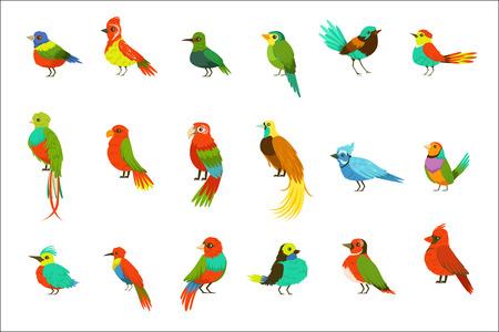 Uccelli esotici dalla foresta pluviale della giungla Set di animali colorati tra cui specie di uccelli del paradiso e pappagalli. Fauna alata delle regioni meridionali con illustrazioni vettoriali di piume di colore brillante.
