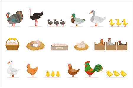 Farm Birds Grown For Meat and For Laying Eggs, Organic Farming Set Of Vector Illustrations With Animals. Farm Production With Adult And Baby Chickens, Ducks And Geese Cartoon Drawings.