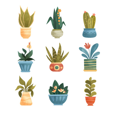 Houseplants in a pots set, elegant home or office decor vector Illustrations isolated on a white background.