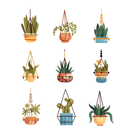 Green hanging indoor house plants set, elements for decoration home or office interior vector Illustrations isolated on a white background.