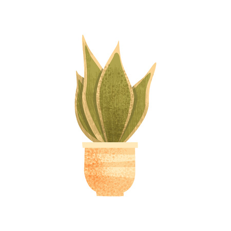 Sansevieria house plant, elegant home or office decor vector Illustration isolated on a white background.