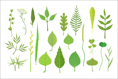 Fresh green leaves from trees, shrubs and grass set for label design. Nature and ecology, cartoon detailed colorful illustration isolated on white background