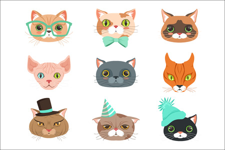 Set of cute cats heads of different breeds, colorful character vector Illustrations isolated on a white background