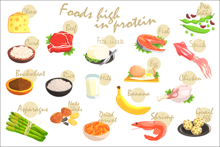 Food Rich In Proteins Hand-Drawn Realistic Poster With Text Information In Vector Design. Zdjęcie Seryjne