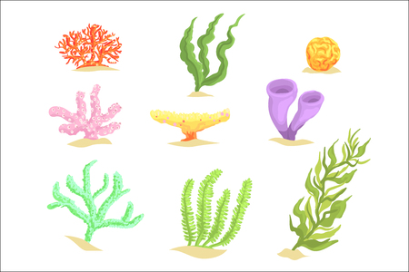 Set of cartoon underwater plants, seaweeds and aquatic marine algae vector Illustrations isolated on white background Иллюстрация