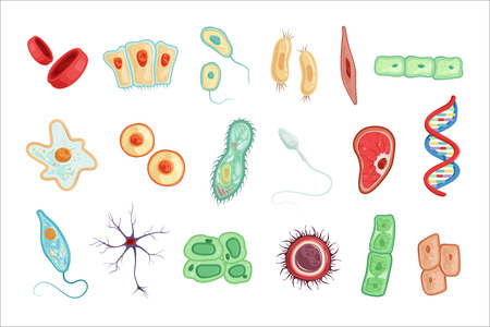 Anatomy of human cells set of detailed vector Illustrations on a white background