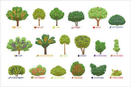 Verschiedene Gartenbeerensträucher sortieren mit gesetzten Namen, Obstbäumen und Beerensträuchern Vektorillustrationen Vektorgrafik