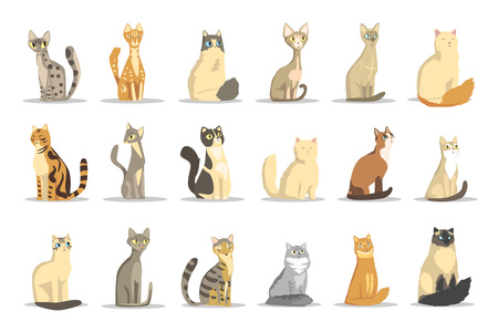 Cat different breeds set, cute pet animal vector Illustrations on a white background