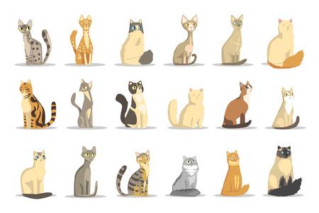 Set di razze diverse di gatto, vettore di animali da compagnia carino illustrazioni su sfondo bianco
