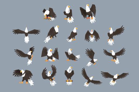 L'image se compose de neuf images de pygargue à tête blanche volant, déployant ses ailes, assis sur une branche. L'ensemble a un fond gris.