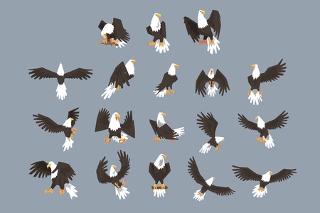 The image consists of nine pictures of bald eagle flying, spreading its wings, sitting on a branch. The set has a grey background.