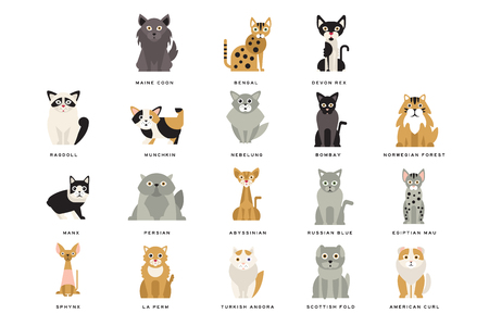 Different flat breeds of cats. Domestic popular and rare exotic animals. Cartoon home pet design. Collection different kitten. Funny characters. Vector illustration collection isolated on white.