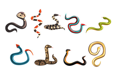 Colored collection of various snakes. Cartoon elongated, legless, carnivorous poisonous and harmless reptile character. Wildlife concept in flat style. Vector illustration isolated on white background