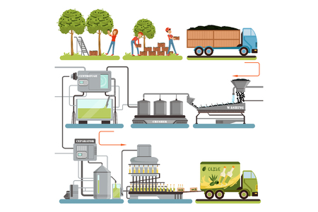 Fasi del processo di produzione dell'olio d'oliva, raccolta delle olive, imballaggio dei prodotti finiti e consegna al consumatore illustrazioni vettoriali isolate su sfondo bianco