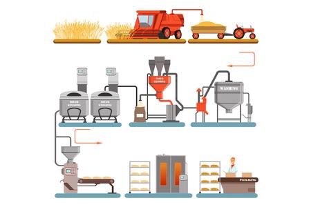 Fasi del processo di produzione del pane dalla raccolta del grano al pane appena sfornato illustrazioni vettoriali isolate su sfondo bianco