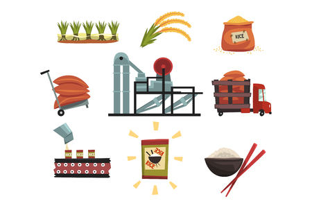 Infographic template of rice production from cultivation to finished product cultivation, drying, harvesting, transportation to factory, milling, packaging, ready product. Flat vector illustration.