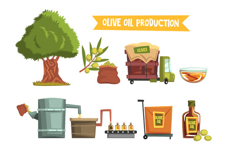 Process of olive oil production by steps from cultivation to finished product growing tree, harvesting, sending to factory, pressing, bottling, packaging, transportation. Flat vector illustration.