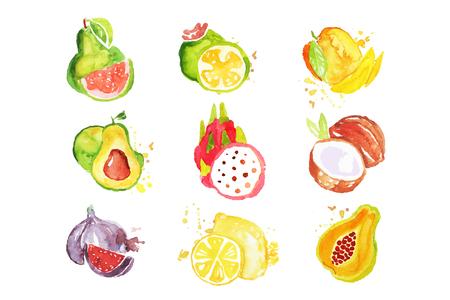 Ensemble de fruits tropicaux aquarelle coloré Illustrations vectorielles