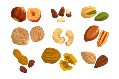 Flat vector icons of nuts and seeds. Hazelnut, pistachio, cashew, nutmeg, walnut, brazil nut, pecan, peanut and almond. Organic food. Vegetarian nutrition. Cartoon design isolated on white background