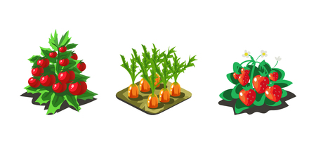 Garden vegetables and berries, carrot, tomato, strawberry, game user interface nature elements for video computer games vector Illustration, web design Illustration
