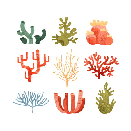 Seaweed set, colorful underwater marine plants vector Illustrations isolated on a white background. Illustration